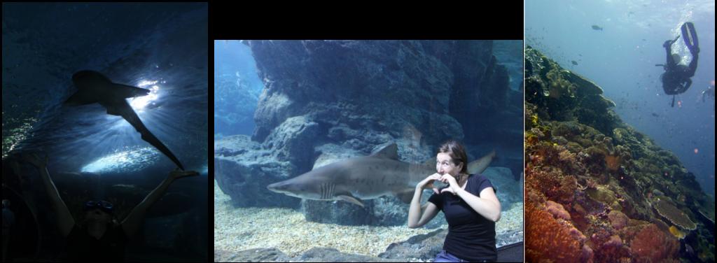 Zoe Zeiler - Best Dive job in the World 2012