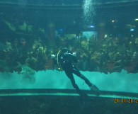 Agata Melissa - Best Dive Job in the World 2012